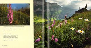 Deceptive beauties: the world of wild orchids.