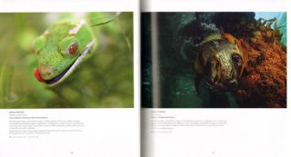 ANZANG eighth collection: Australasian nature photography.