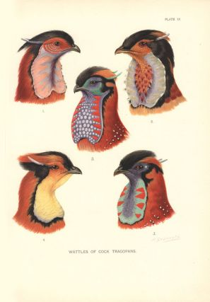 A monograph of the pheasants.