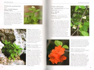 Threatened plants of the Cayman Islands: the red list.
