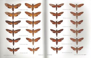 A guide to the hawkmoths of the Serra dos Orgaos, south-eastern Brazil.