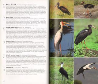 Wildlife of Southern Africa: travellers guide.