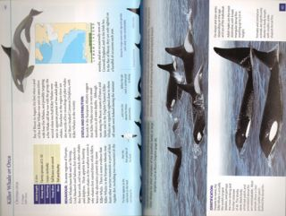 Whales and dolphins of the European Atlantic, the Bay of Biscay, English Channel, Celtic Sea and coastal SW Ireland.