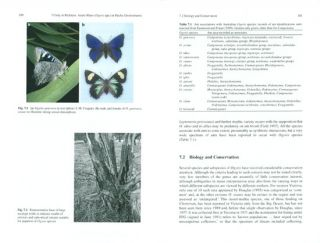 Butterfly conservation in South-eastern Australia: progress and prospects.