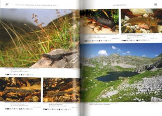 Salamanders and newts of Europe, North Africa and Western Asia.