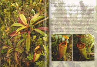 Field guide to the pitcher plants of the Philippines.