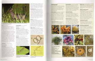 Singapore biodiversity: an encyclopedia of the natural environment and sustainable development.