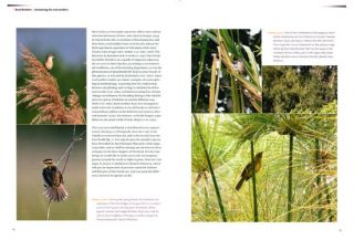 The reed warblers: diversity in a uniform bird family.