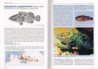 Groupers of the world: a field and market guide.