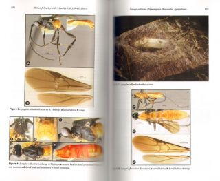 Advances in the systematics of fossil and modern insects: honouring Alexandr Rasnitsyn.