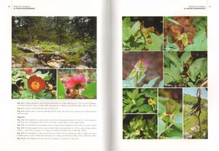 Peonies of the world: polymorphism and diversity.