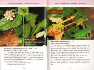 A pocket guide: phasmids of Peninsular Malaysia and Singapore.