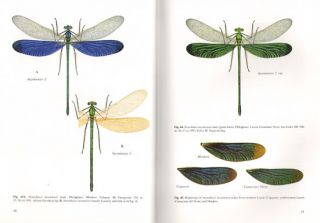 The metalwing demoiselles of the eastern tropics: their identification and biology.