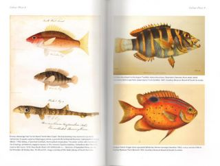 Discovery of Australia's fishes: a history of Australian ichthyology to 1930.