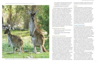 Australia's amazing Kangaroos: their conservation, unique biology and coexistence with humans.