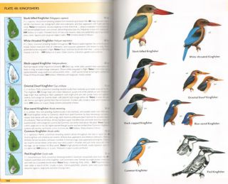 Birds of Sri Lanka.