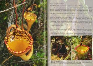 Field guide to the Pitcher plants of Sulawesi.