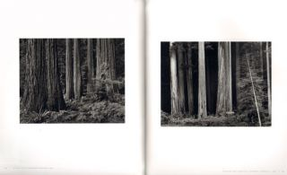 Ansel Adams: trees.