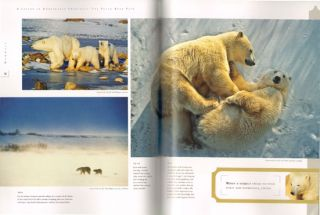 Wildlife photography: stories from the field.