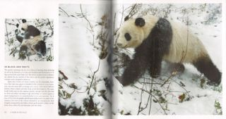 Panda: back from the brink.