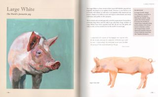 The illustrated guide to pigs: how to choose them, how to keep them.