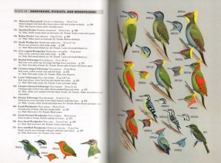 A field guide to the birds of Peninsular Malaysia and Singapore.