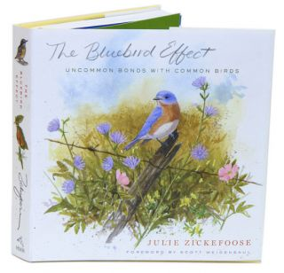 Bluebird effect: uncommon bonds with common birds. Julie Zickefoose