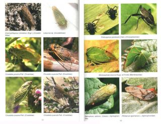 Insects of Kazakhstan: a photographic atlas.