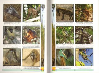 Field guide to wildlife of the Gambia: an introduction to common flowers and animals.