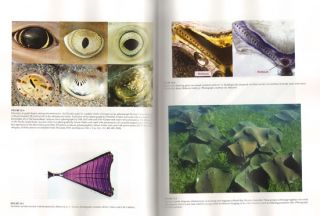 Biology of sharks and their relatives.