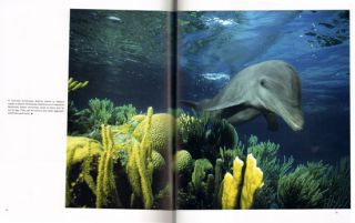 Gentle giants: an emotional face to face with dolphins and whales.
