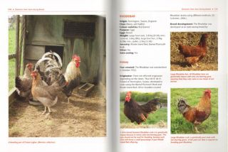 Traditional British poultry breeds.