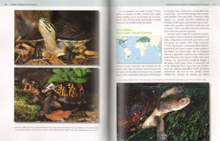 Turtles, tortoises and terrapins: a natural history.