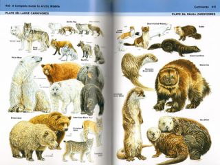 A complete guide to Arctic wildlife.