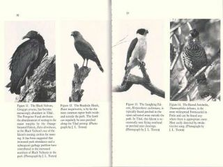 The birds of Tikal: an annotated checklist for Tikal National Park and Peten, Guatemala.