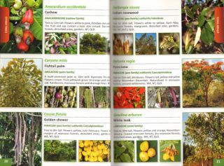Weeds of northern Australia: a field guide.