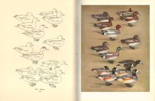 The waterfowl of the world [volume two only].