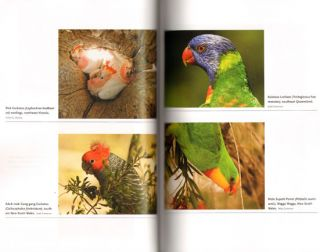 Parrots: the animal answer guide.