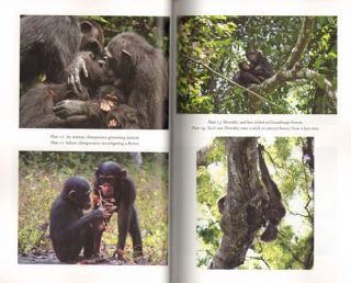 Among African apes: stories and photos from the field.