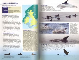 Britain's sea mammals: whales, dolphins, porpoises, and seals and where to find them.