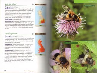 Britain's hoverflies: an introduction to the hoverflies of Britain and Ireland.