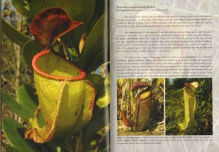 Field guide to the pitcher plants of Australia and New Guinea.