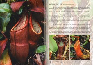 Field guide to the pitcher plants of Peninsular Malaysia and Indochina.