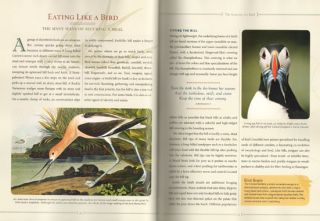 Birdwatcher's bible: a complete treasury: science, know-how, beauty, lore.