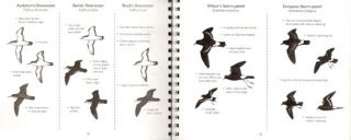 Pelagic birds of the North Atlantic: an identification guide.