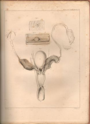 On the mammary glands of the Ornithorhynchus paradoxus [drop title]. Richard Owen