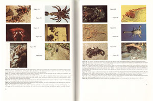 Captive invertebrates: a guide to their biology and husbandry.