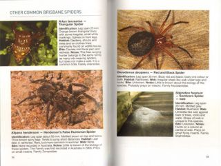 Spiders of the Greater Brisbane region.