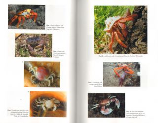 Walking sideways: the remarkable world of crabs.