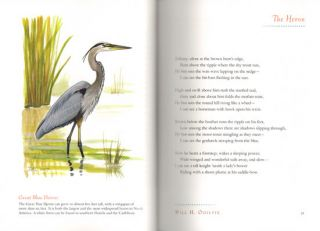 Bright wings: an illustrated anthology of poems about birds.